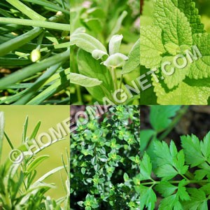 Homeopathic Herbs