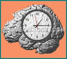 Brain & Biological Clock