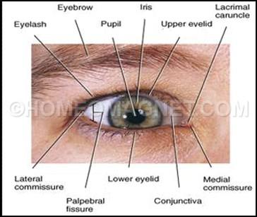 External Eye